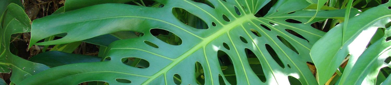 Зеленый сайт о растениях